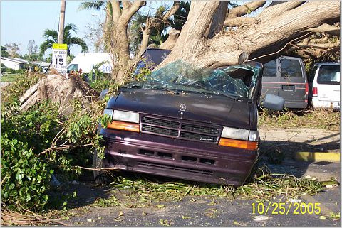 hurricain wilma toppled a tree into a car